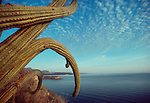 Baja, Mexico, Pitya dulce cactus frames the east coast of the Baja peninsula, looking North toward Mulege, Baja Sur, Sea of Cortez, Gulfo California, Gulf of California, Mexico, Lemaireocereus thurberi
