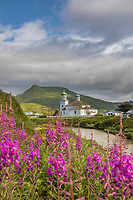 Fireweeed in front of the Russian Orthodox Cathedral of the Holy Ascension of Christ, in the town of Unalaska, Unalaska Island, Dutch Harbor, Aleutian Islands, Alaska.