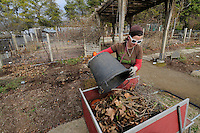 NWA Media/ J.T. Wampler - Megan Lankford, lead gardner at the Botanical Garden of the Ozarks, dumps debris Friday Dec. 26, 2014. The staff at the garden is working on winter clean up chores like raking leaves and pruning perennials according to Lankford.
