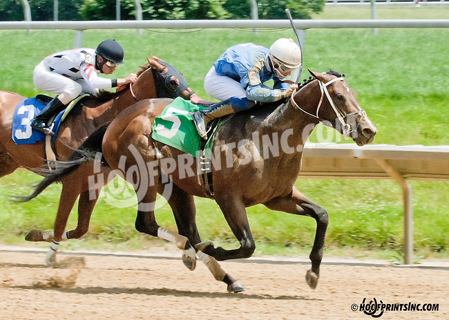 Sharp Harbour winning at Delaware Park on 6/15/13