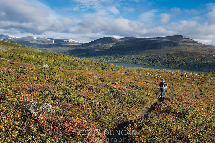 Female hiking hiking through autumn colored landscape above lake Teusjaure, Kungsleden trail, Lapland, Sweden