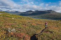 Female hiking hiking through autumn colored landscape above lake Teusjaure, Kungsleden trail, Lapland, Sweden