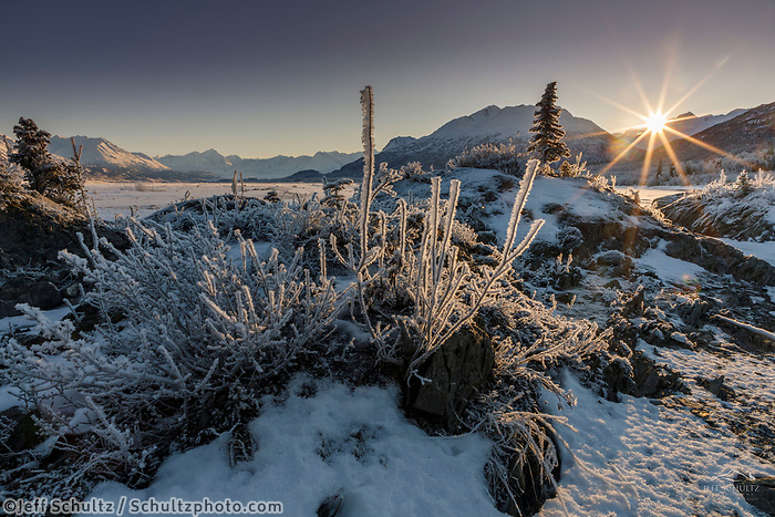 Winter landscape of hoarfrost on grasses and spruce tree along the Knik River on a sunny day in the Matanuska Valley near Palmer, Alaska. The sun peaking over the Chugach Mountains in Southcentral Alaska<br /> <br /> Photo by Jeff Schultz/SchultzPhoto.com  (C) 2019  ALL RIGHTS RESERVED