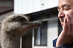 Naoto Matsumura communicates with an ostrich that is among the  pets and other animals he has been caring for since they were left behind in the government-imposed no-go zone about 10 km from the Fukushima Daiichi Nuclear Power Plant in Tomioka, Fukushima  Prefecture, Japan on 01 Mar. 2012. . .Photographer: Robert Gilhooly