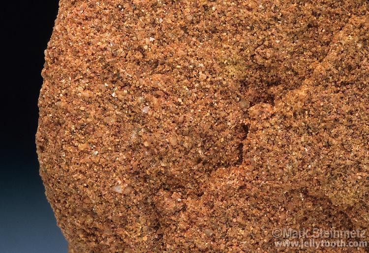 Close-up of Sandstone (1x). Fairfield member, Cuyahoga formation. Chestnut Ridge, Fairfield County, OH.
