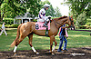 Battlefield Angel before The Christiana Stakes at Delaware Park on 7/9/14