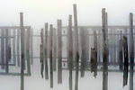 Mist and fog with old pilings and heron