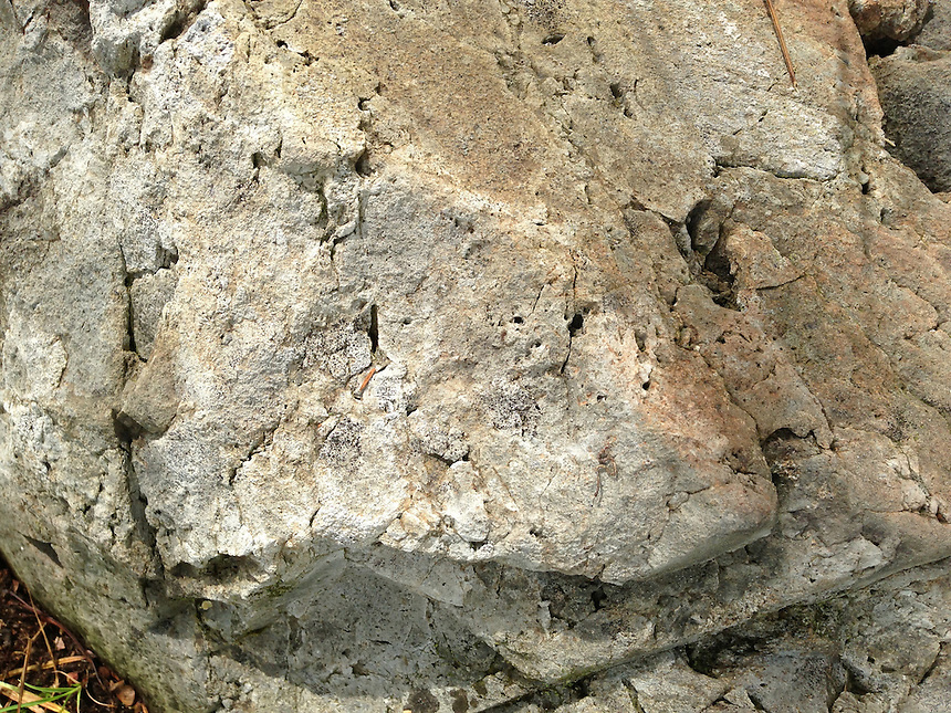 Rock Face, Witherle Woods, Castine, Maine, US