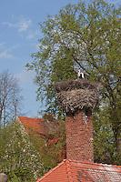 Weißstorch, Weisstorch, auf Nest, Horst auf einem Schornstein, Weiß-Storch, Weiss-Storch, Storch, Ciconia ciconia, White Stork, Cigogne blanche