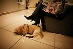 Thursday January 31st 2008. .Paris, France..At the hairdresser's.Rue Pierre Charron - 8th Arrondissement.