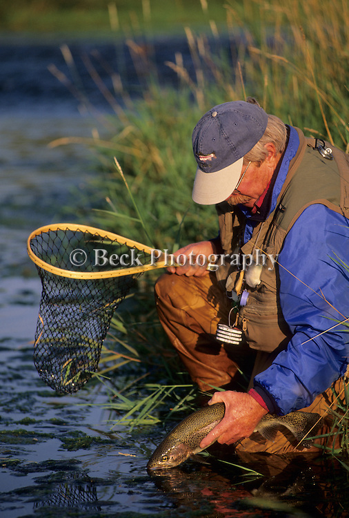 Brown trout release on the Bighorn River, Montana.