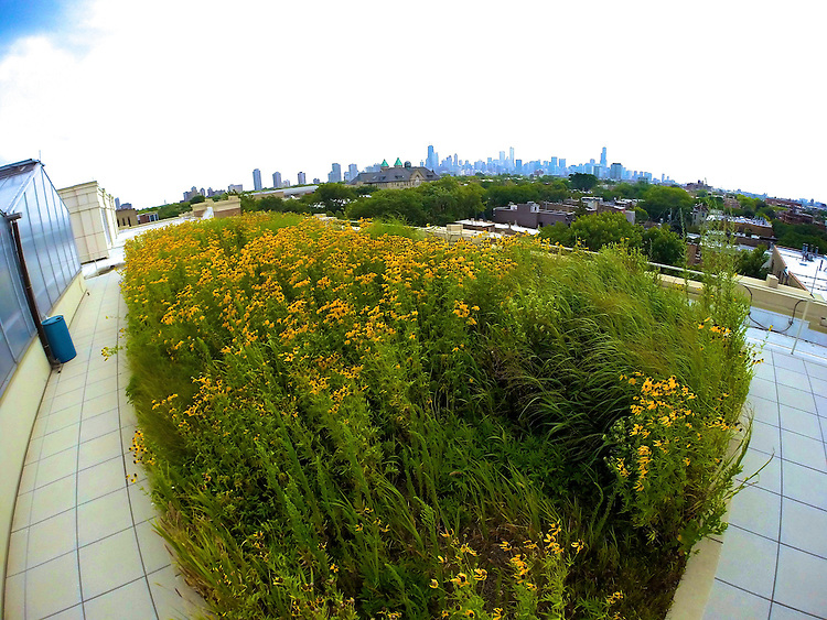 The green rooftop on the McGowan South science building 1110 W. Belden Ave., July 31, 2014. (DePaul University/Jeff Carrion)