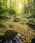 Autumn, Greenbrier, Great Smoky Mountains NP, TN