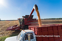 63801-12620 Unloading corn into truck during harvest-aerial  Marion Co. IL