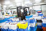 le 4 mai 2017, la premiere vente se débute à 6 heures du matin et concerne la pêche hauturière. les mareyeurs de toute la région viennent y acheter leurs poissons. la répartition des caisses est faite par les employées de la criée.