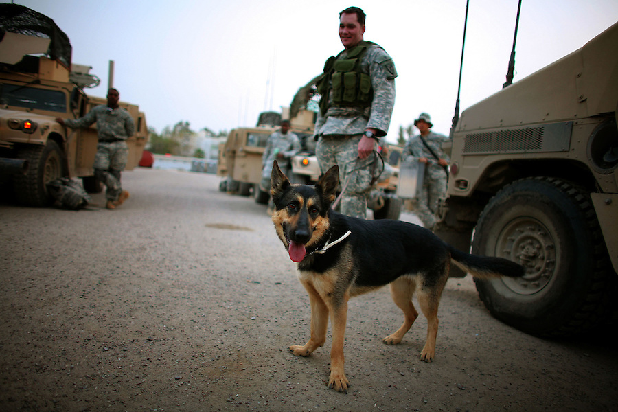 A military working dog waits to go out on a raid with engineers from 1st Platoon Alpha Co. 3-25 BSTB 2BCT 82nd Airborne Division on Tuesday April 24, 2007.