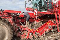 Cleaning stationary potatoe harvester