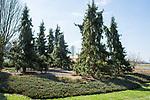 Hill Arboretum