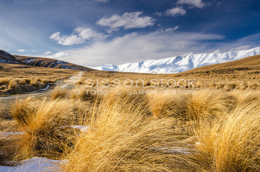 Tussocks and the Hawkdun Range, Central Otago, New Zealand - stock photo, canvas, fine art print