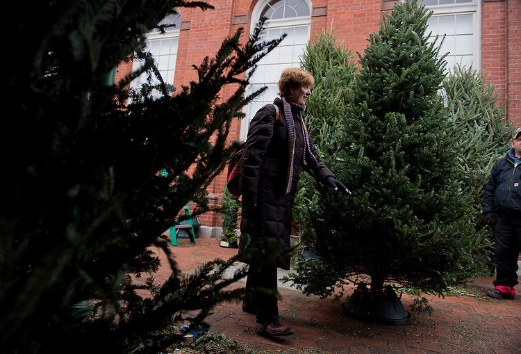 UNITED STATES - DECEMBER 07:  Tara Hamilton of Capitol Hill checks out Christmas trees for sale at Eastern Market.  The trees are from Dunham's Farm in Shanghai, W.Va. (Photo By Tom Williams/CQ Roll Call)