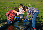 Boys looking for fish in the water trough