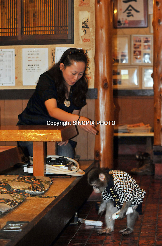 Fuku-chan, 6, a Japanese monkey waiter, drops hot towelsin an Izakaya bar in north of Tokyo, Japan. The six year old monkey looks after the guests hot towels by taking them from the steamer oven and delivering them to all guests. The bar is extremely popular amongst people from all over Japan who come to see the monkey waiters.