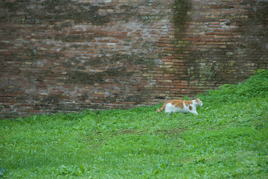 cats do live very happily in the botanical garden of rome italy, because there are many birds