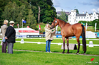 GBR-Jenny Levett with Ballymore Rich Cat during the CCI1* First Horse Inspection. 2017 GBR-Blair Castle International Horse Trial.  Blair Atholl. Scotland. Wednesday 23 August. Copyright Photo: Libby Law Photography