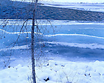 single winter tree along the snowy banks of the icy Methow River, Washington State
