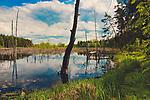 Zarastające jezioro w okolicach Węgorzewa.