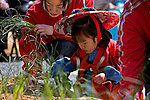 A mother guides her daughter through the ritual of planting rice during the Otaue Matsuri, or Rice Planting Festival, at the Hiromine Shrine near Himeji