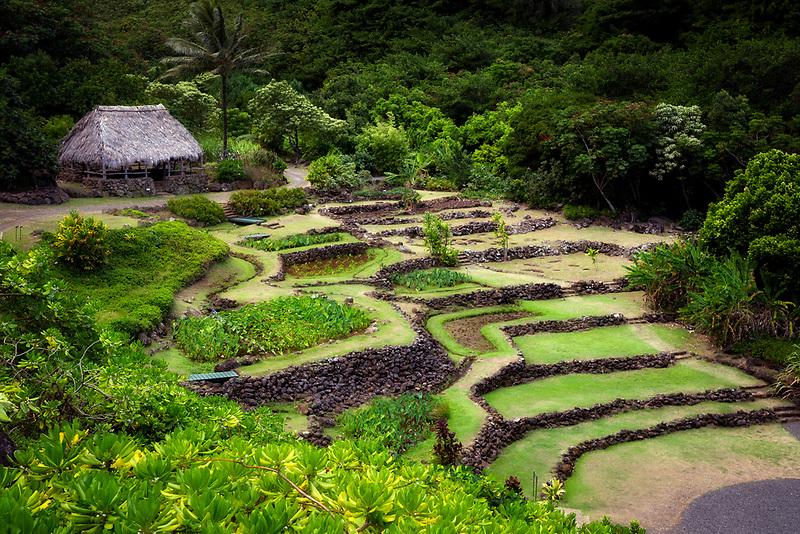 View of trraces and Makana Mountain ridge. Limahuli Gardens, Kauai, Hawaii