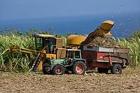 France/DOM/Martinique/ Macouba: Distillerie JM de l'Habitation Crassous de Médeuil à Fonds-Préville - Coupe de la Canne à sucre -Coupe mécanique