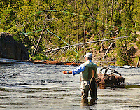 A fly fisherman trying his luck on the Firehole River in Yellowstone National Park.
