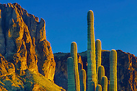Saguaro  and The Flatiron<br />