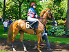 Mavourneen with Bethany Baumgardner aboard before The International Ladies Fegentri race at Delaware Park on 6/13/17