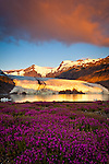 Scenic view of Portage Glacier with icebergs at dawn. Byron Peak and glacier glows in golden orange. Fireweed flowers in the foreground. Chugach National Forest, Kenai Peninsula, Southcentral Alaska, Summer.