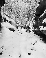 &ldquo;Snow Fall in Bear Hollow&rdquo;<br />