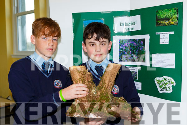 Jack McGuire and Jack Costello with their project on Rhododendrums at the St Brendan's College Science Fair on Tuesday