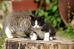 Kitten licking