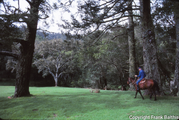 horseback riding at Point Reyes