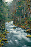 French Pete Creek<br /> Three Sisters Wilderness<br /> Willamette National Forest<br /> Cascade Range,  Oregon