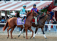 Reflect in the post parade as Sippican Harbor (no. 6) wins the Spinaway Stakes (Grade 1), Sep. 1, 2018 at the Saratoga Race Course, Saratoga Springs, NY.  Ridden by  Joel Rosario, and trained by Gary Contessa, Sippican Harbor finished 2 lengths in front of Restless Rider (No. 11).  (Bruce Dudek/Eclipse Sportswire)