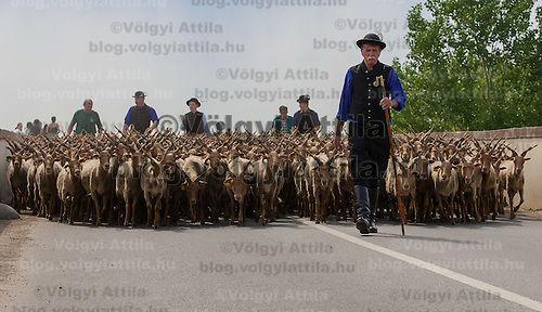 A traditional Hungarian shepard walks front of his flock of Racka sheeps in the Great Hungarian Plain (Puszta) in Hortobagy, 200 km (124 miles) east of Budapest April 30, 2011. Every spring around St. George's Day, Hortobagy celebrates the beginning of the new grazing season. ATTILA VOLGYI