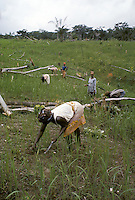 Slash-and-burn agriculture: woman of Kpelle tribe weeding a rice feld in Liberia, West Africa