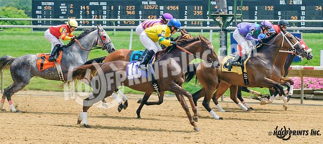 Sunny Maria winning at Delaware Park on 7/1/15