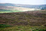 Moorland landscape, Dartmoor national park, near Postbridge, Devon, England, UK