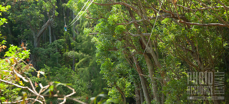 Flying through the canopy of trees in the rainforest while Ziplining on the Big island with Kohala zipline