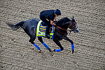 LOUISVILLE, KENTUCKY - MAY 02: Roadster, trained by Bob Baffert, exercises in preparation for the Kentucky Derby at Churchill Downs in Louisville, Kentucky on May 2, 2019. Scott Serio/Eclipse Sportswire/CSM