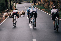 surprise encounter in the descent of the Coll de Puig Major for the race leaders<br /> <br /> Trofeo Lloseta - Andratx: 140km<br /> 27th Challenge Ciclista Mallorca 2018
